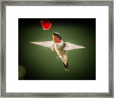 Hummers In The Garden Four Framed Print by Michael Putnam