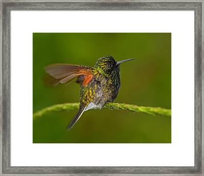 Humming Along Framed Print by Tony Beck