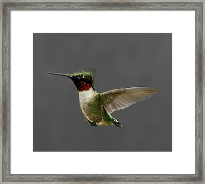 Framed Print featuring the photograph Hummingbird 1 by John Crothers