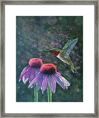Hummingbird And Cone Flowers Framed Print by Diana Shively