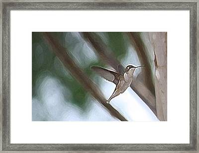 Framed Print featuring the photograph Hummingbird by Donna  Smith