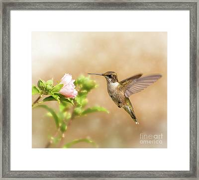 Hummingbird Hovering Framed Print