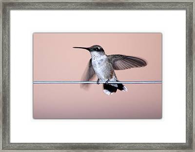 Hummingbird On A Wire Framed Print by Wind Home Photography