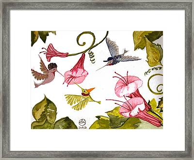 Hummingbird Party Framed Print by Alexandra  Sanders