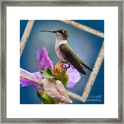 Hummingbird Picture Pretty Framed Print by Betty LaRue