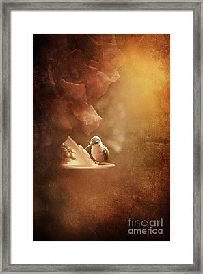 Hummingbird Resting In Golden Light Framed Print by Cindy Singleton