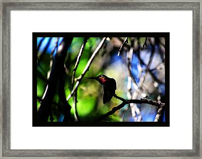 Framed Print featuring the photograph Hummingbird Resting On A Twig by Susanne Still