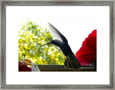 Hummingbird Series 12 Framed Print by Al Bourassa