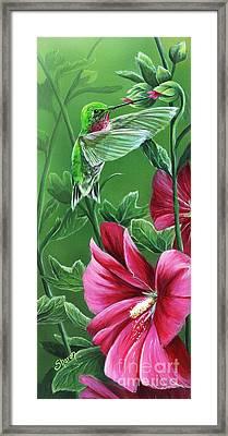 Hummingbird Framed Print by Sharon Molinaro