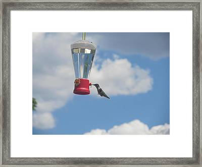 Framed Print featuring the photograph Just A Hummingbird by Tina M Wenger