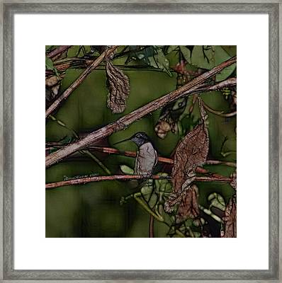 Framed Print featuring the photograph Hummingbird Waiting For Dinner by EricaMaxine  Price