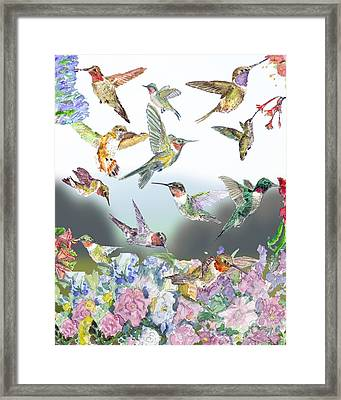 Hummingbirds Galore Framed Print