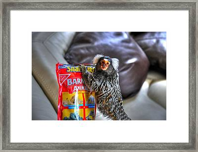 Hungry Framed Print by Barry R Jones Jr