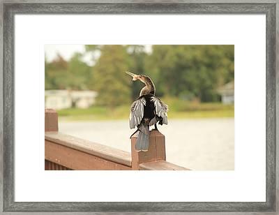 Hungry Bird Framed Print