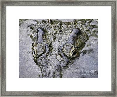 Framed Print featuring the photograph Hungry Crocodile by Alexandra Jordankova