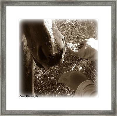 Hungry Framed Print by Desiree Lyon