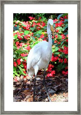 Hungry Egret  Framed Print