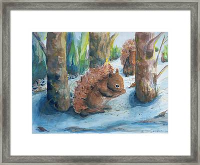 Hungry Red Squirrels Framed Print