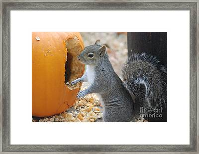 Hungry Squirrel Framed Print by Mark McReynolds