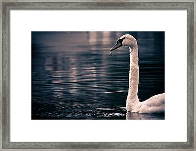 Hungry Swan Framed Print by Justin Albrecht