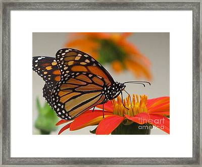 Framed Print featuring the photograph Hungry by Tina Marie