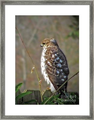 Hunter In A Farmer's World Framed Print by Laura Brightwood