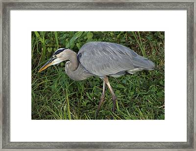 Framed Print featuring the photograph Hunter by Jerry Cahill