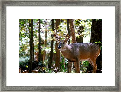 Framed Print featuring the photograph Hunters Dream 10 Point Buck by Peggy Franz