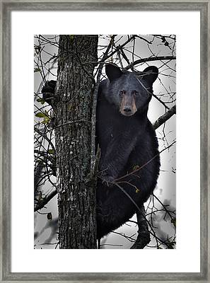 Hunting Berries Framed Print
