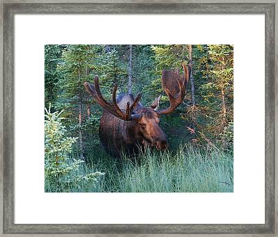 Framed Print featuring the photograph Hunting Some Munchies by Doug Lloyd