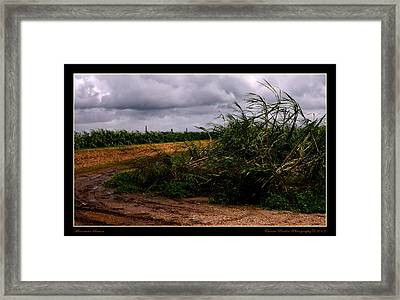 Hurricane Season Framed Print by Eunice Parker