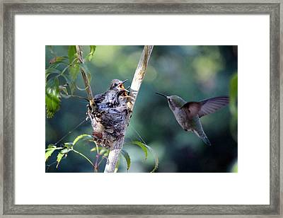 Hurry Mom Framed Print