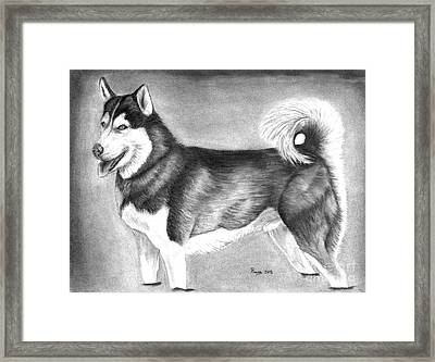Husky  Framed Print by Russ  Smith