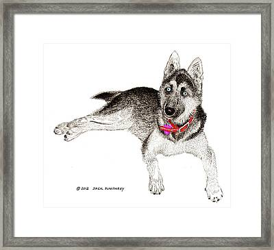 Husky With Blue Eyes And Red Collar Framed Print