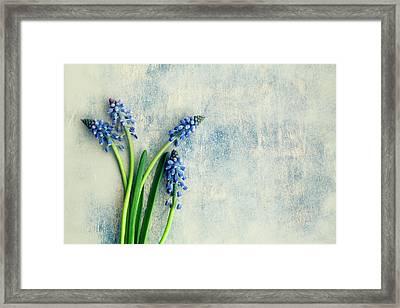 Hyacinth Framed Print by Jim Franco