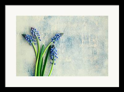 Hyacinths Framed Prints