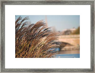 Hyde Park Framed Print by Harvey Barrison