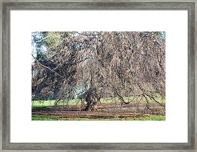 Hyde Park London Framed Print