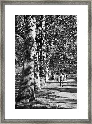 Framed Print featuring the photograph Hyde Park Trees by Maj Seda
