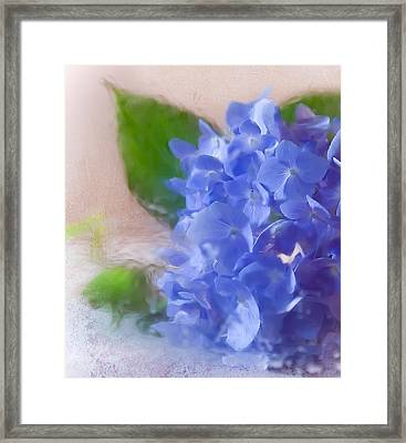 Framed Print featuring the photograph Hydrangea by Anna Rumiantseva