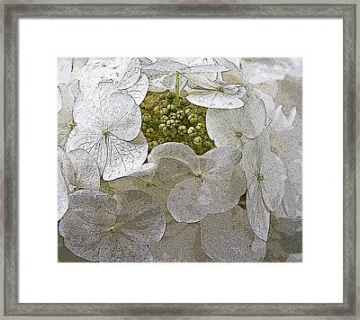 Framed Print featuring the photograph Hydrangea by Michael Friedman