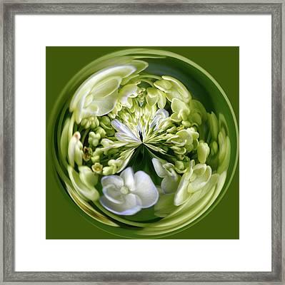 Hydrangea Orb Framed Print