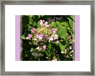 Hydrangea Thank You Framed Print by Larry Bishop