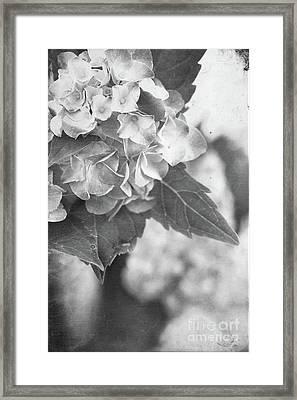 Hydrangeas In Black And White Framed Print by Stephanie Frey