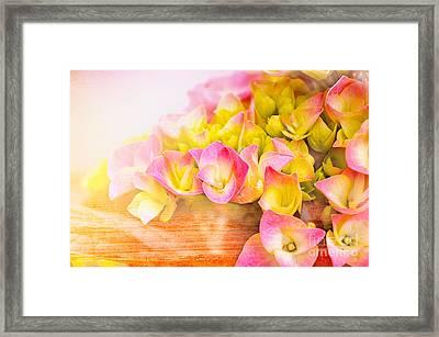 Hydrangeas In Bloom Framed Print by Elaine Manley