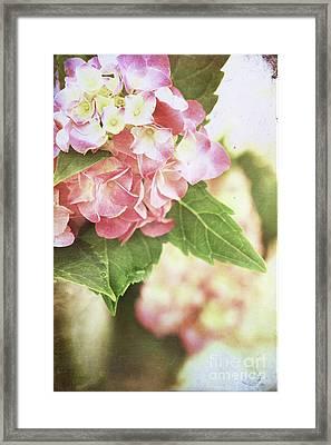 Hydrangeas Framed Print by Stephanie Frey