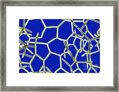 Hydrodictyon Framed Print by M. I. Walker