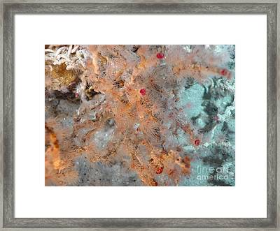 Hydrothermal Vent Tubeworms Framed Print by Science Source