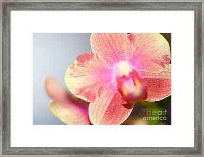 I Am Bold Framed Print by Melissa Haley