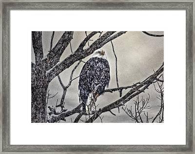I Am Cold Framed Print by Gary Smith